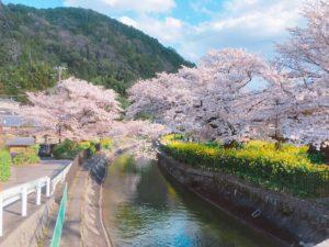 Foodieで撮った桜の画像
